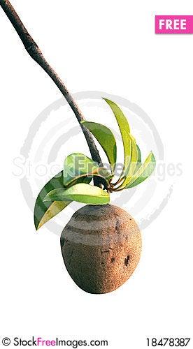 Free Tropical Fruit - Chiku Royalty Free Stock Photography - 18478387