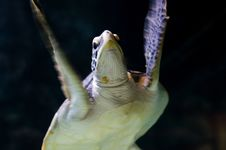 Underwater Sea Turtle Royalty Free Stock Image