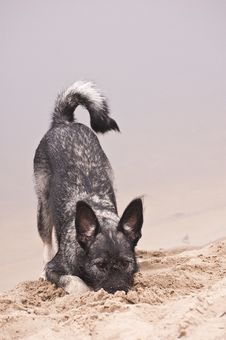 Doggy At The Autumn Beach Stock Photography