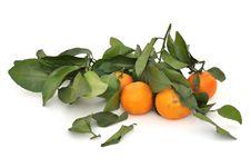 Ripe Tangerine Orange Royalty Free Stock Photo
