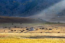 Free Horses Around Mongolian Yurt Royalty Free Stock Images - 18474909