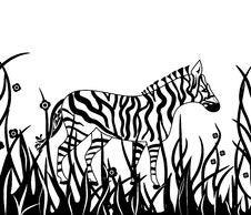 Free Zebra In Safari Royalty Free Stock Images - 18476119