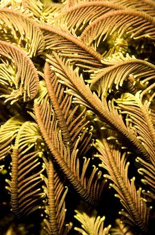 Free Macro Image Of Feather Star Texture Stock Photo - 18477190