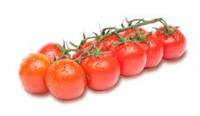 Cherry Tomatoes On The Branch With Water Drops Royalty Free Stock Photo
