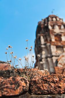 Free Dry Grass Flower In The Old Temple Royalty Free Stock Photo - 18478135