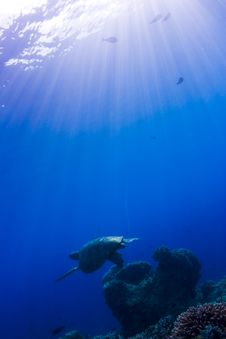 Turtle Swimming Over A Coral Reef In The Sunlight Stock Photos
