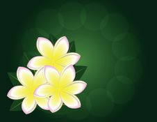 Free Magnolia Stock Photo - 18479170