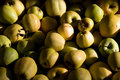 Free Many Yellow And Green Apples Royalty Free Stock Photography - 18480827