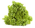Free Lettuce Royalty Free Stock Images - 18482269