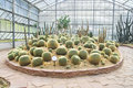 Free Big Cactus Garden On Sand Ground,conservatory Royalty Free Stock Photos - 18487538