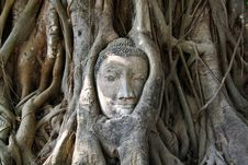 Free Face Of Buddha Stute Stock Photo - 18480210