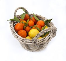 Free Lemon And Tangerines Royalty Free Stock Images - 18482259