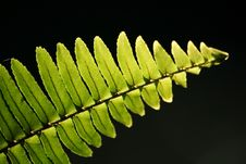 Free Fern In Lighting Royalty Free Stock Photos - 18482308