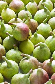 Free Pears(vertical) Stock Image - 18482351