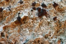Free Closeup Of  Ancient  Limestone  Texture Stock Photography - 18482882