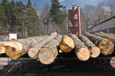 Free Forestry Stock Images - 18483024