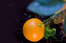Free Ripe Tangerine Stock Photo - 18483250