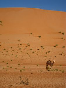 Free The Arabic Desert Royalty Free Stock Image - 18483296