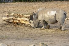 Free Rhinoceros Stock Photography - 18484182