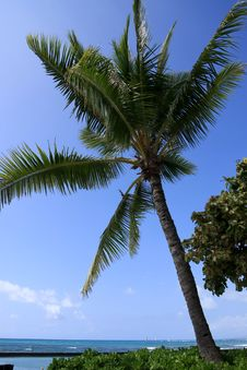 Free Palm Tree And Blue Pacific Ocean. Royalty Free Stock Photography - 18485927
