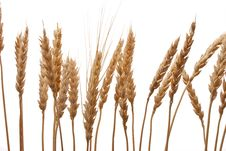 Free Wheat Ears Royalty Free Stock Photography - 18486707