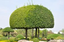 Trimmed Bush In Garden Stock Photography