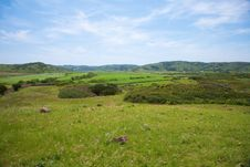 Green Fields At Menorca Royalty Free Stock Images