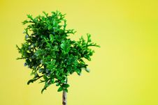 Free Single Young Tree Royalty Free Stock Images - 18489099