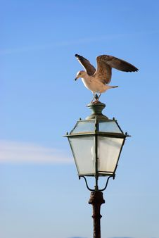Free Seagull On The Light Royalty Free Stock Images - 18489499