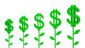 Free Dollar Plants. Royalty Free Stock Images - 18499099