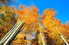 Free Autumn Over The Forest Royalty Free Stock Photography - 18490297