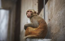 Free Monkey In The City Sitting On The Window Royalty Free Stock Image - 18491986