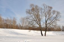 Free The Winter Park. Royalty Free Stock Photography - 18492917