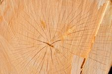 Free Cross-section Cut Of A Trunk Of A Beech Stock Images - 18493084
