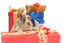 Free Little Rabbit Between The Boxes With Gifts Stock Photography - 18493582