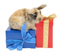 Little Rabbit On The Boxes With Gifts Stock Photos