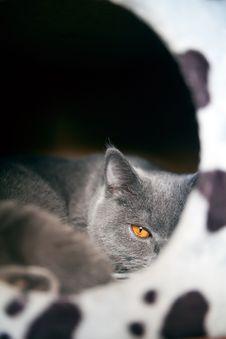 Free Orange Eye Stock Image - 18493671