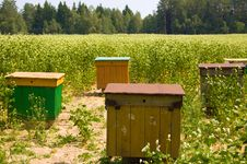 Apiary In The Field Royalty Free Stock Image
