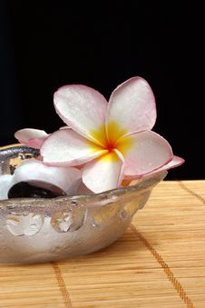 Free Frangipane Flower And Pebbles In Glass Bowl Stock Photos - 1850523