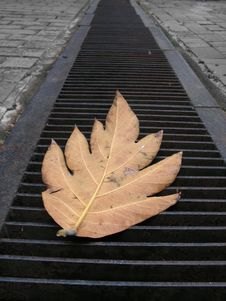 Lonely Leaf On Metal Grills Stock Photo