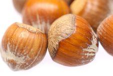 Free Little Hazelnuts Stock Image - 1853291