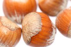 Free Little Hazelnuts Stock Image - 1853311