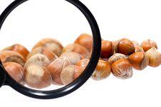 Free Little Hazelnuts Royalty Free Stock Images - 1853369