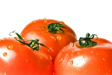 Free Ripe Tomatoes Stock Images - 1854504