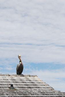 Pelican On Roof Top Stock Image