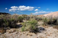 Free American Desert Royalty Free Stock Photos - 18500298