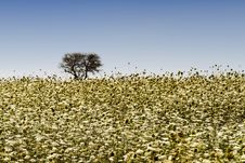Free Wild Flowers Field Stock Image - 18502971