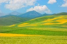 Free China Qinghai Flower And Field Landscape Royalty Free Stock Photo - 18503925