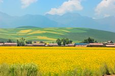 Free China Qinghai Flower And Field Landscape Stock Photography - 18503942