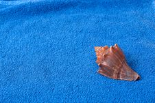 Free Brown Seashell On A Blue Towel Stock Photo - 18504890